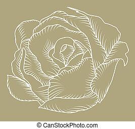 Rose sketch - The sketch of a rose bud