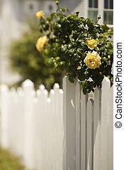 rose, stehen streikposten zaun, bush.