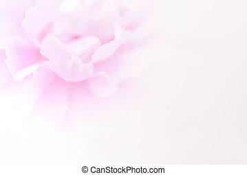 rose, style, doux, fond