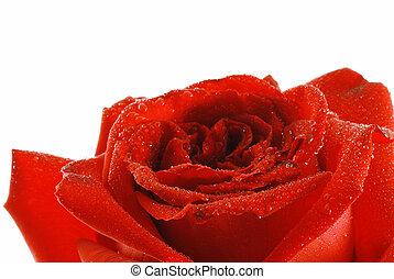 rose, tau