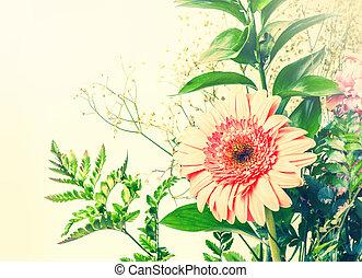 rose, tendre, feuilles, vert, gerbera