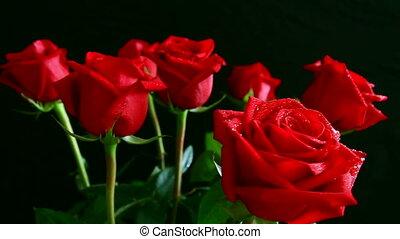 rose, tournoyer, eau, noir, gouttes, rouges