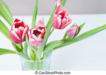 rose, tulipes