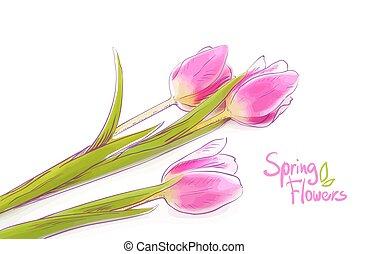 rose, tulipes, blanc, isolé, arrière-plan.