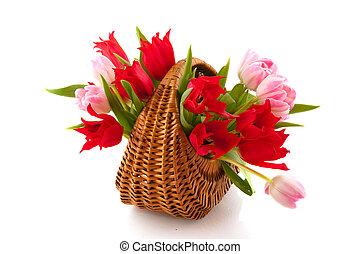 rose, tulipes, rouges