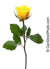 rose, unique, jaune