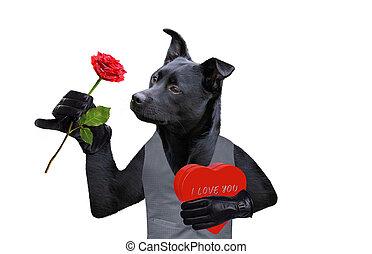 rose, valentines, chien, cadeau