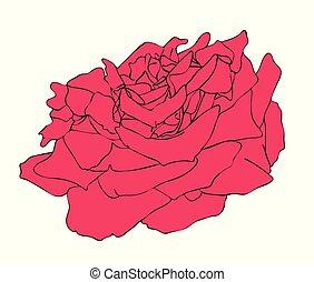 rose, vecteur, fleur, illustration