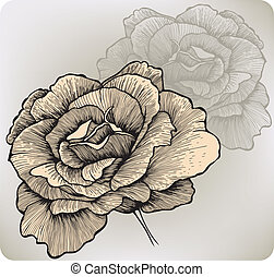 rose, vecteur, fleur, illustration., hand-drawing.