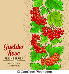 rose, vecteur, guelder, fond
