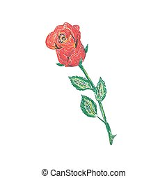 rose, vecteur, illustration, croquis