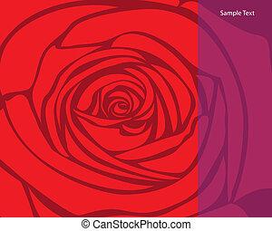 rose, vecteur