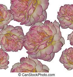 rose, vecteur, seamless, fond