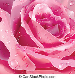 rose., vector, plano de fondo, para, su, design.