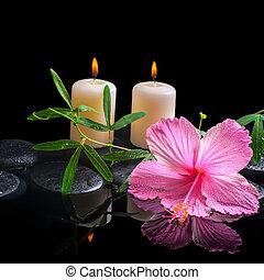 rose, vert, délicat, fond, passionf, spa, vrille, hibiscus