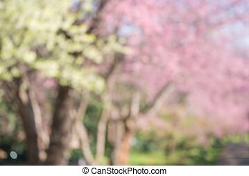 rose, wang, fleur, chiangmai, district, mae, defocused, cerise, thaïlande, blanc, sakura