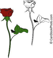 rose, weiß rot, hintergrund.
