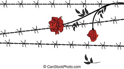 rose with barbed wire - vector illustration with barbed wire...