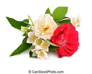 Rose with jasmine isolated on white background.