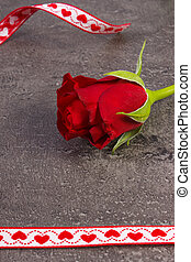 Rose with red ribbon for Valentines Day