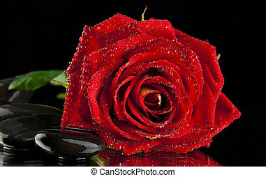 rose with stone on a black background
