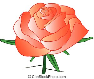 Rose with thorn - Red rose with thorn on white background is...