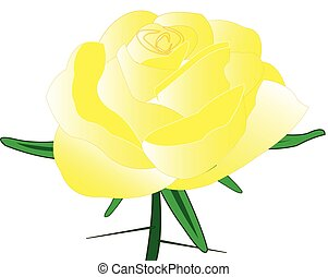 Rose yellow with thorn on white background is insulated