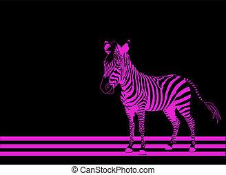 rose, zebra