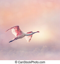 Roseate Spoonbill in flight - Roseate Spoonbills Flying at ...