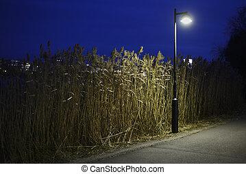 roseau, nuit, lampe, helsinki, parc, rue