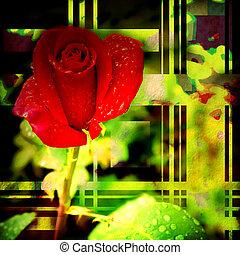 rosebud, cartão, vermelho