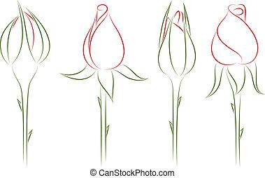 rosebuds., 矢量, illustration.