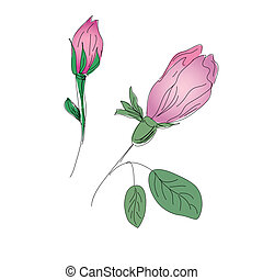 Rosebuds colorful pencil sketch