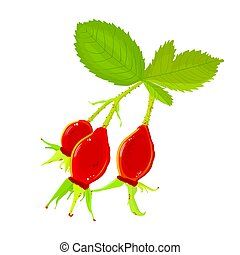 Rosehip branch with red berries isolated on a white ...