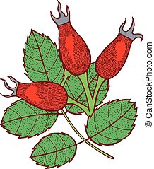 Rosehip - graphic floral artwork. Isolated hand drawn design...