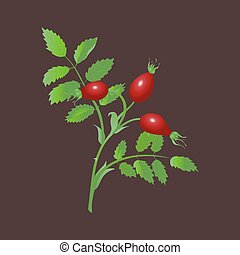 rosehip, rama