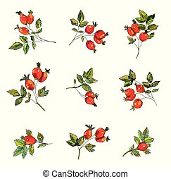 Rosehip set with berries and leaves illustration - Rosehip ...