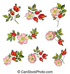 Rosehip set with flowers and berries illustration - Rosehip ...