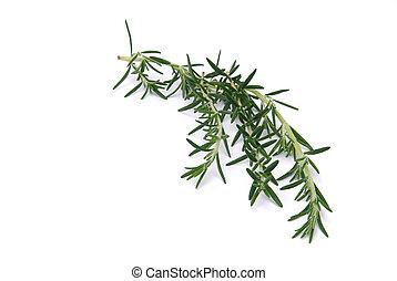 Rosemary 04