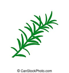 Rosemary branch. Isolated on white background. Hand drawn vector illustration. Retro style.