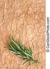 rosemary branch on a yellow aged background