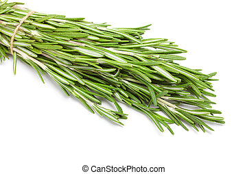 rosemary bunch isolated