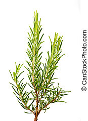 Rosemary - bunch of rosemary isolated on white