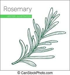 rosemary green