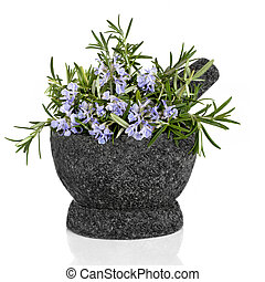 Rosemary Herb and Flowers - Rosemary herb in flower in a ...