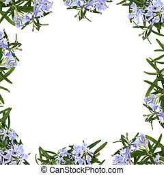 Rosemary herb flowers forming an abstract border isolated over white background.