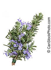 Rosemary herb leaf sprig in flower isolated over white background. Rosmarinus.