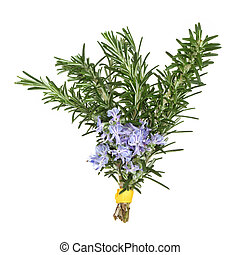 Rosemary leaf and flower sprig tied in a bunch, isolated over white background.