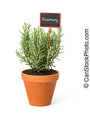 Rosemary in a clay pot with a wooden label