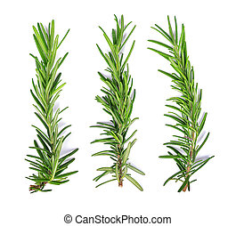 Rosemary isolated on white background Top view